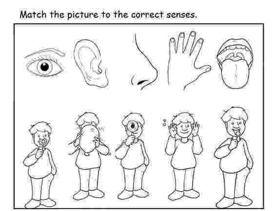 5 senses coloring pages for preschoolers preschool five sense worksheets 1 funnycrafts preschoolers 5 for senses pages coloring