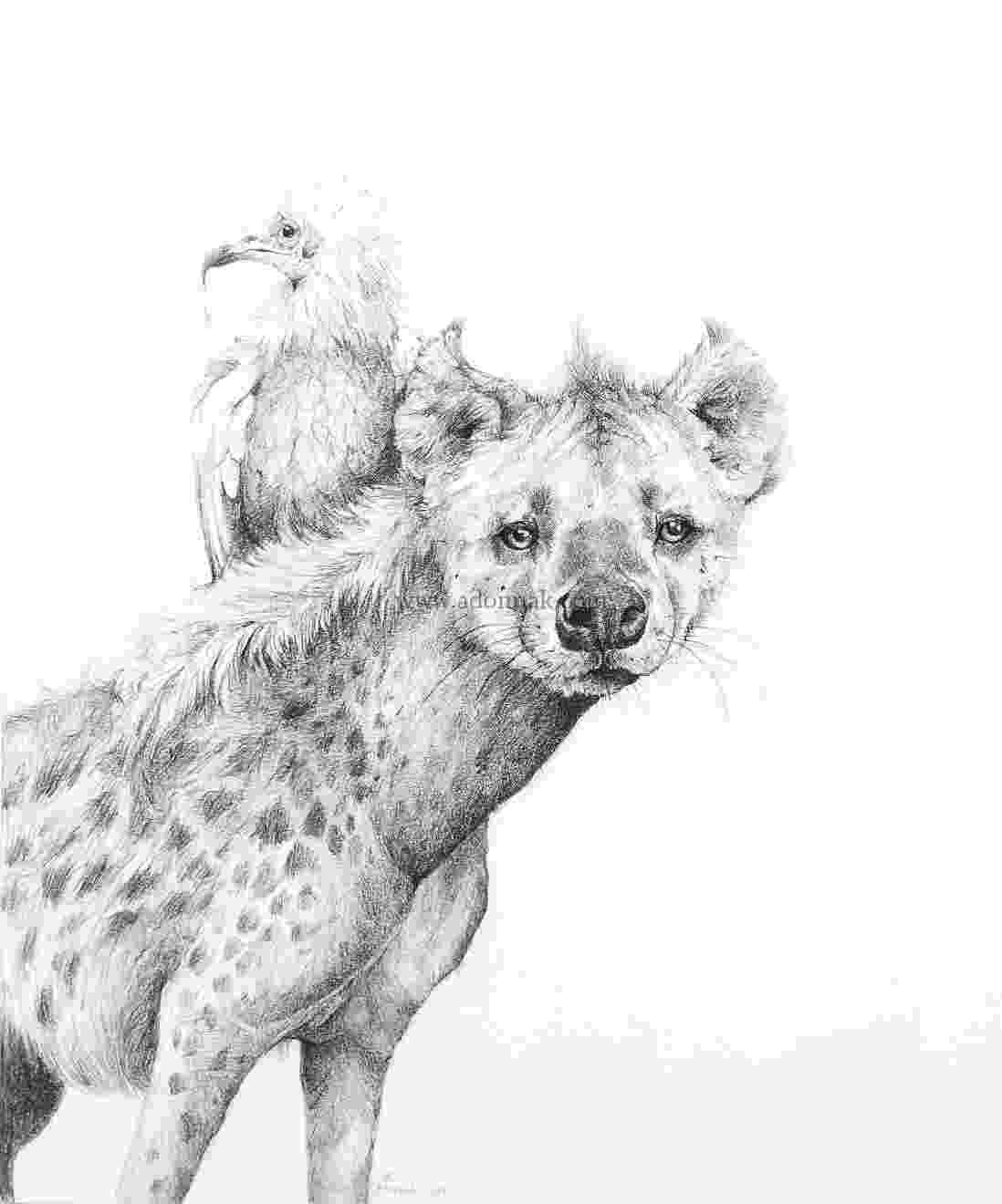 african animals feline lion tawny free photo on pixabay african animals