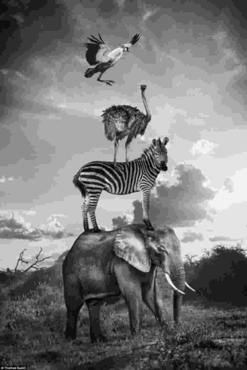 african animals marine animals silhouettes set stock vector illustration animals african
