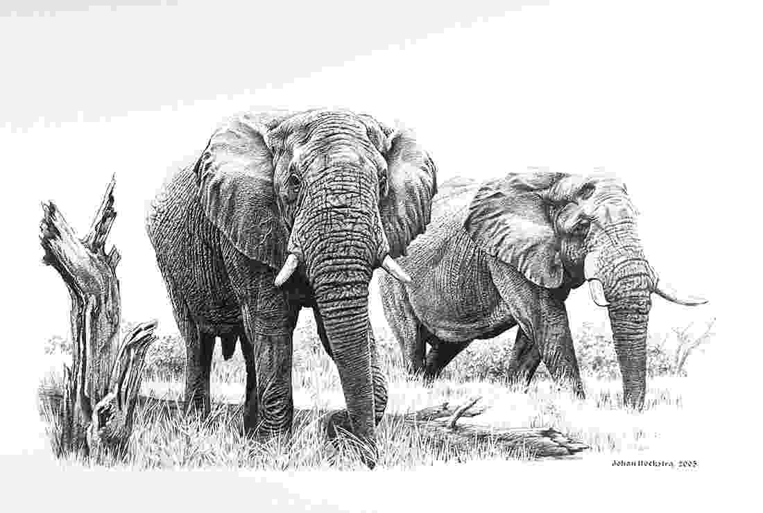 african animals photo of the day ubuntu african animals