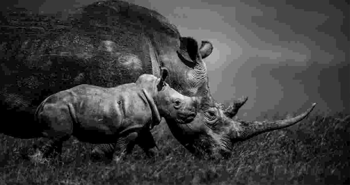 african animals pictures african wildlife photography by david gulden in pictures pictures african animals