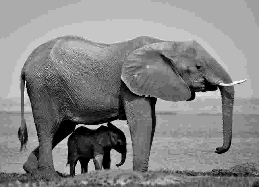 african animals pictures baby african elephant animals beautiful baby elephant african pictures animals