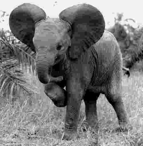 african animals pictures dramatic black and white photos of african wildlife by animals african pictures