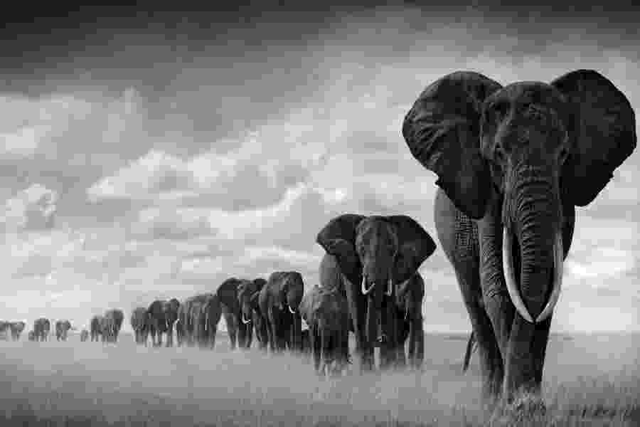 african animals pictures dramatic black and white photos of african wildlife by pictures animals african 1 1