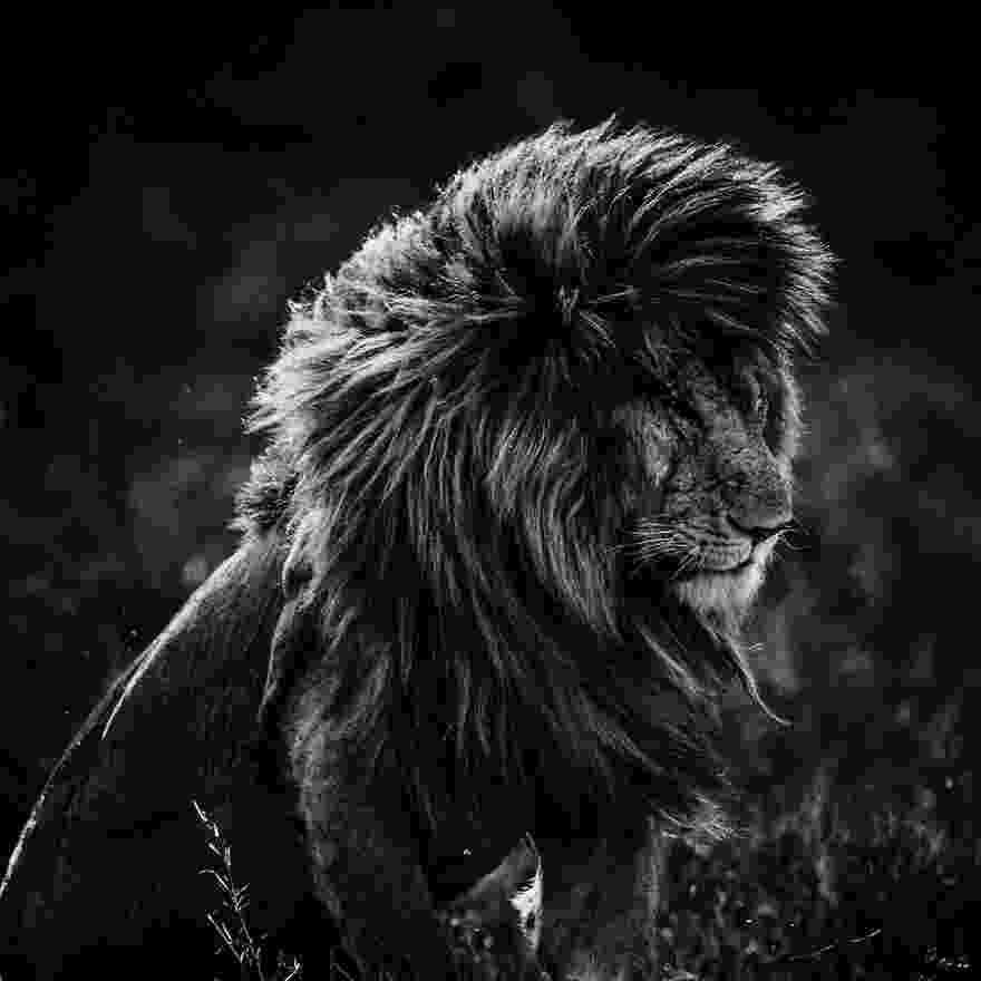 african animals pictures fantastic black and white animal photography everything african animals pictures