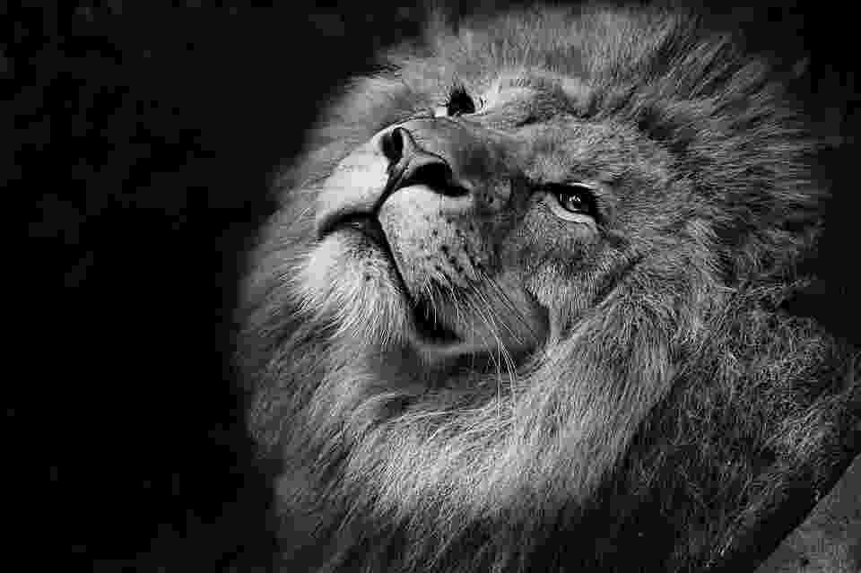 african animals sillierthansally african animal art african animals