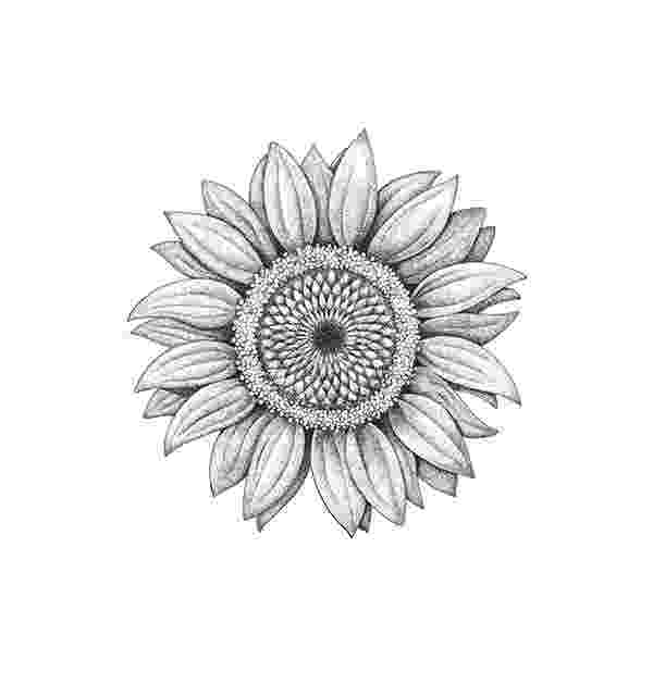 alabama state flower 50 state flowers coloring pages for kids alabama flower state