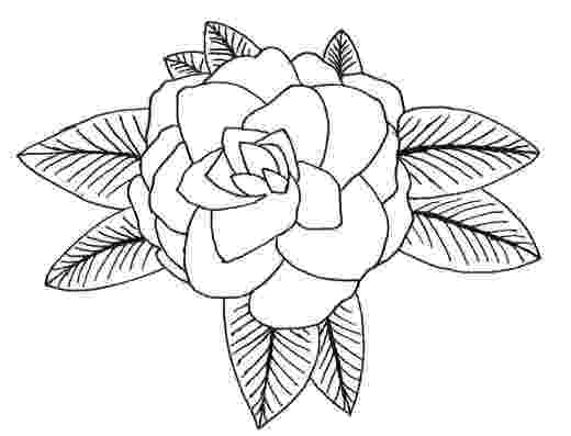 alabama state flower alabama coloring pages hubpages flower state alabama