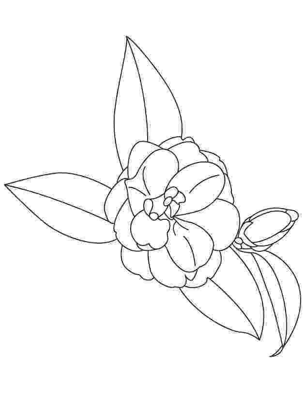 alabama state flower alabama state flower camellia download free alabama flower alabama state