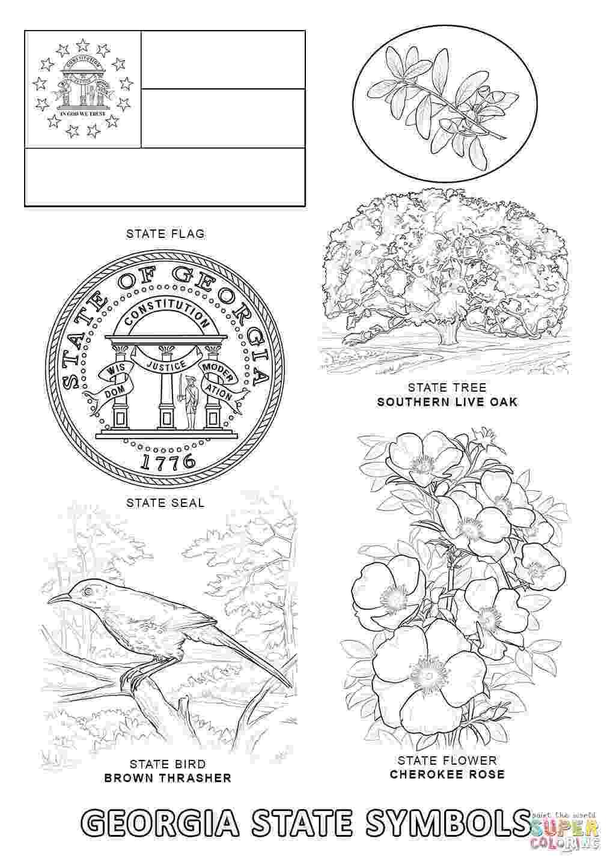 alabama state flower alabama state symbols coloring page free printable alabama state flower
