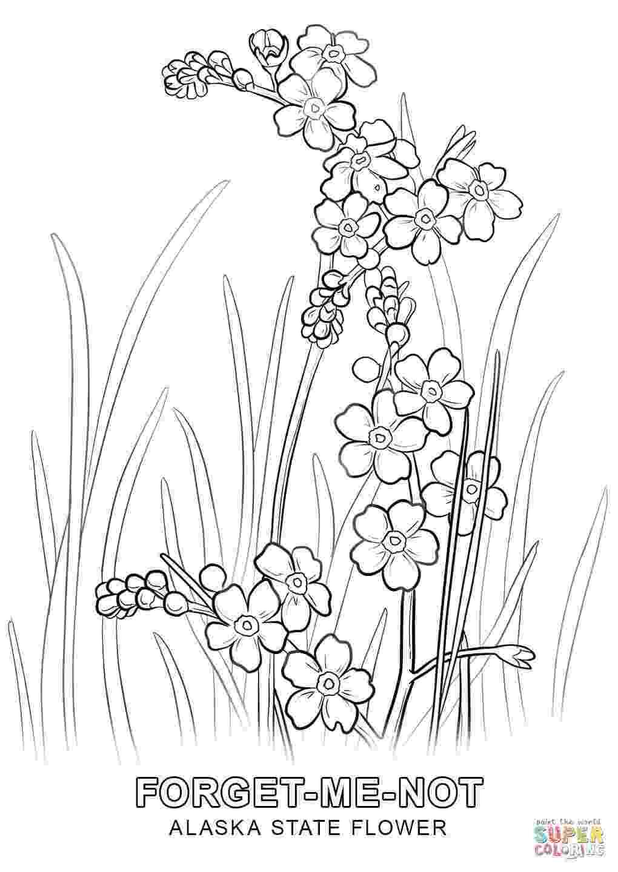 alabama state flower alabama state symbols coloring page free printable flower alabama state