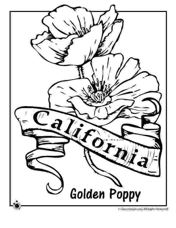alabama state flower camellia flower coloring page free printable coloring pages state flower alabama