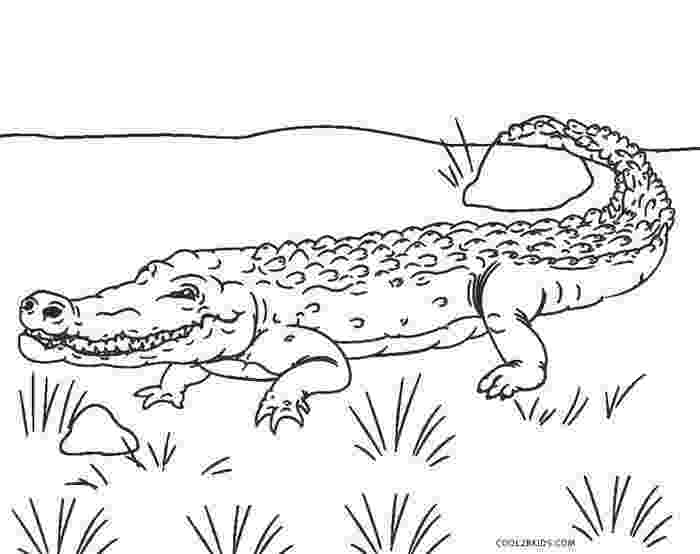 aligator coloring pages free printable alligator coloring pages for kids cool2bkids coloring aligator pages 1 2
