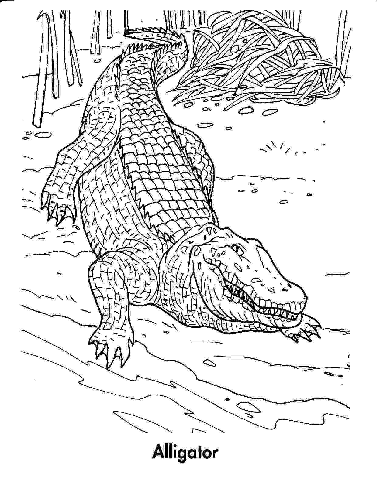 aligator coloring pages free printable crocodile coloring pages for kids aligator coloring pages
