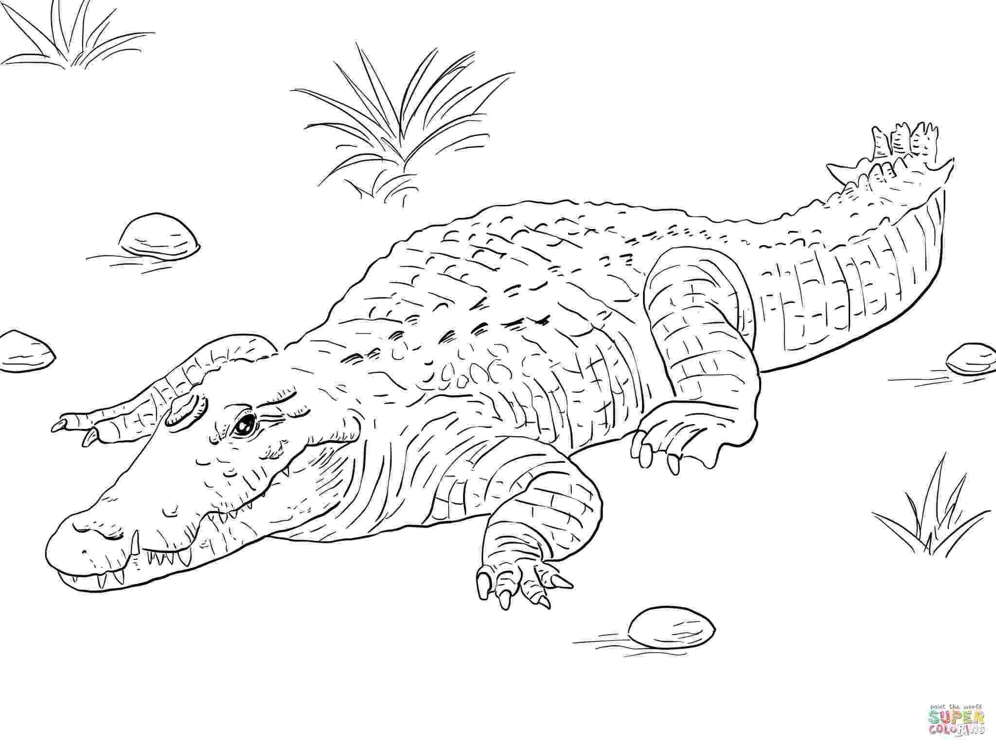 alligator color alligators and crocodiles coloring pages download and alligator color