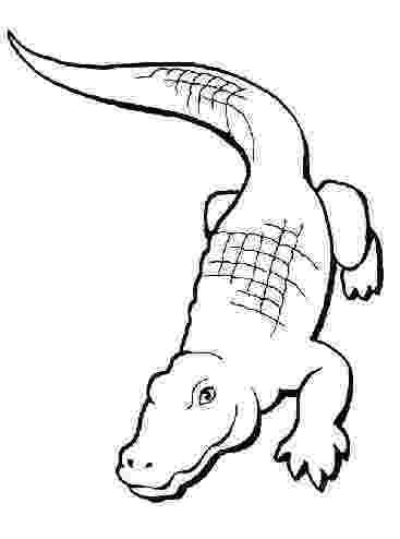 alligator color coloring pictures alligator land alligator color