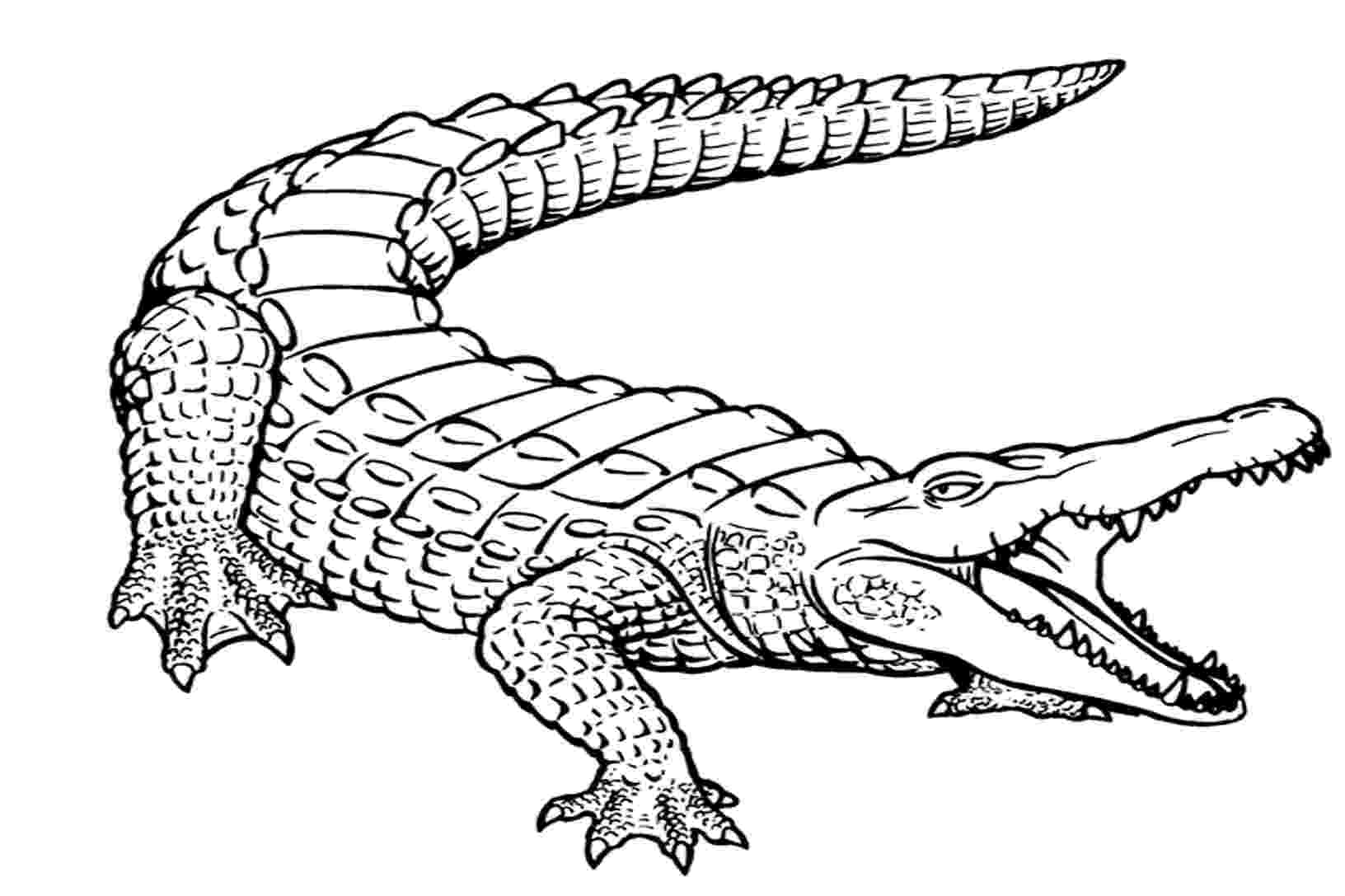 alligator color free printable alligator coloring pages for kids color alligator