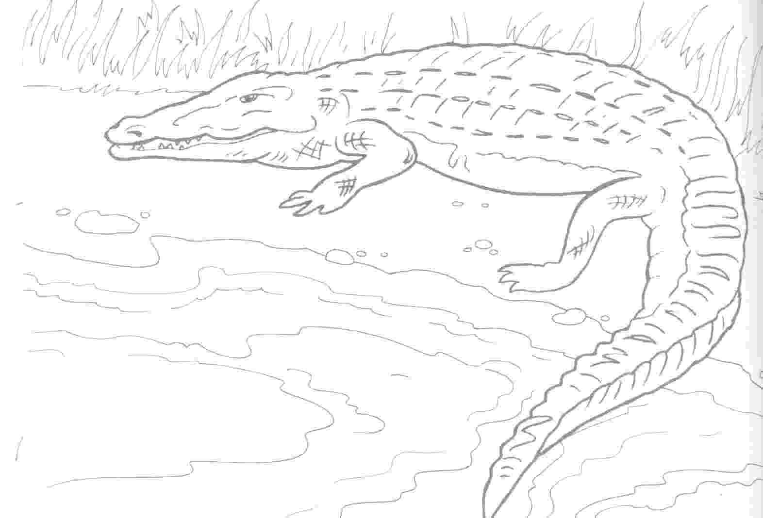 alligator color free printable alligator coloring pages for kids color alligator 1 2