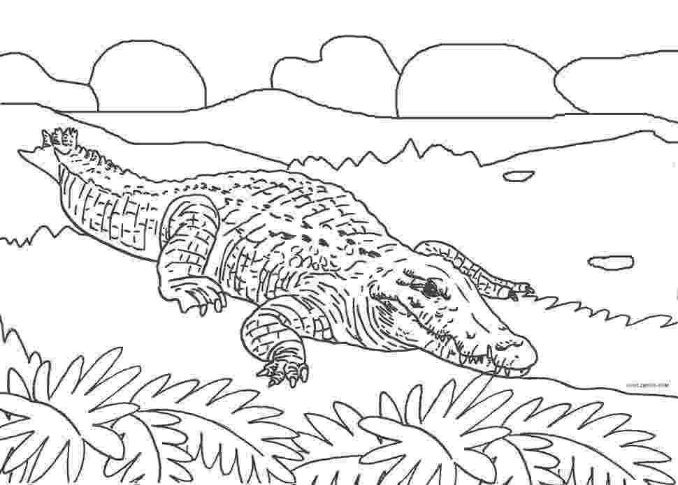 alligator color free printable alligator coloring pages for kids cool2bkids color alligator