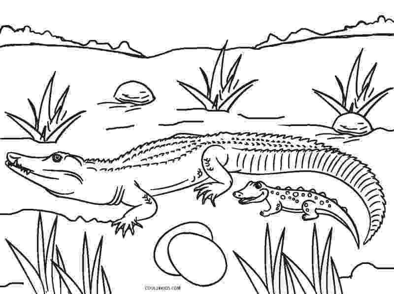 alligator color free printable crocodile coloring pages for kids color alligator