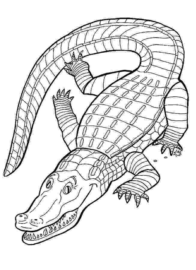 alligator coloring pages free printable alligator coloring pages for kids pages coloring alligator 1 1