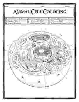 animal cell coloring page animal cell coloring page coloring home animal coloring cell page 1 1