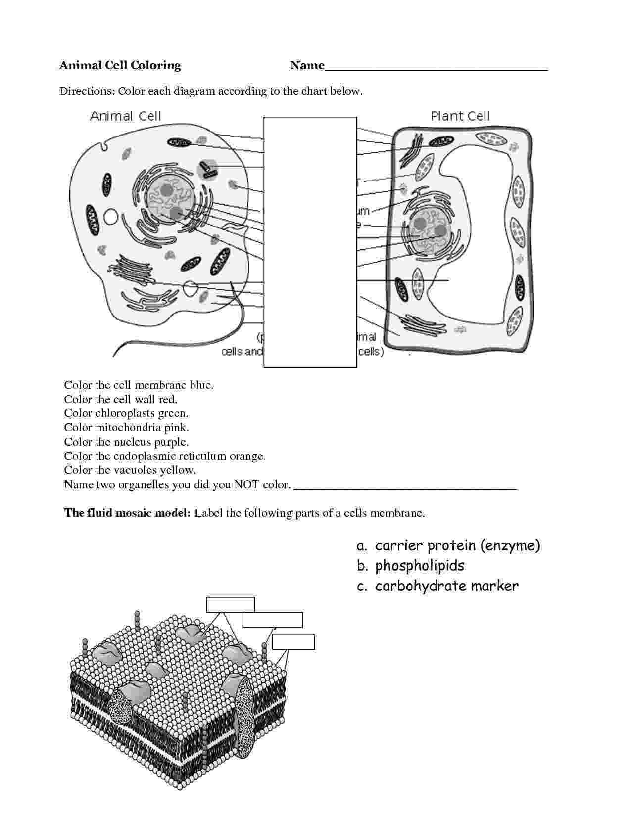 animal cell coloring page animal cell coloring page coloring home cell coloring page animal