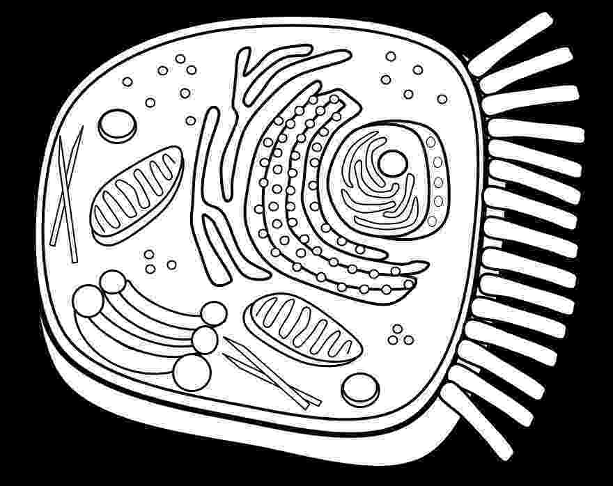 animal cell coloring page animal cell coloring page coloring home page animal coloring cell
