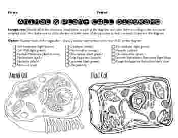 animal cell coloring page plant and animal cell coloring page by the science sleuth page coloring cell animal