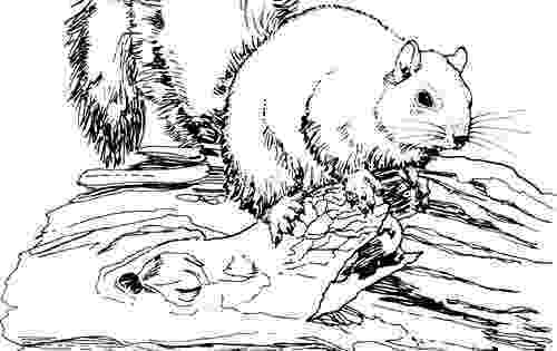 animal coloring suggestions wild animal coloring pages hellokidscom suggestions coloring animal