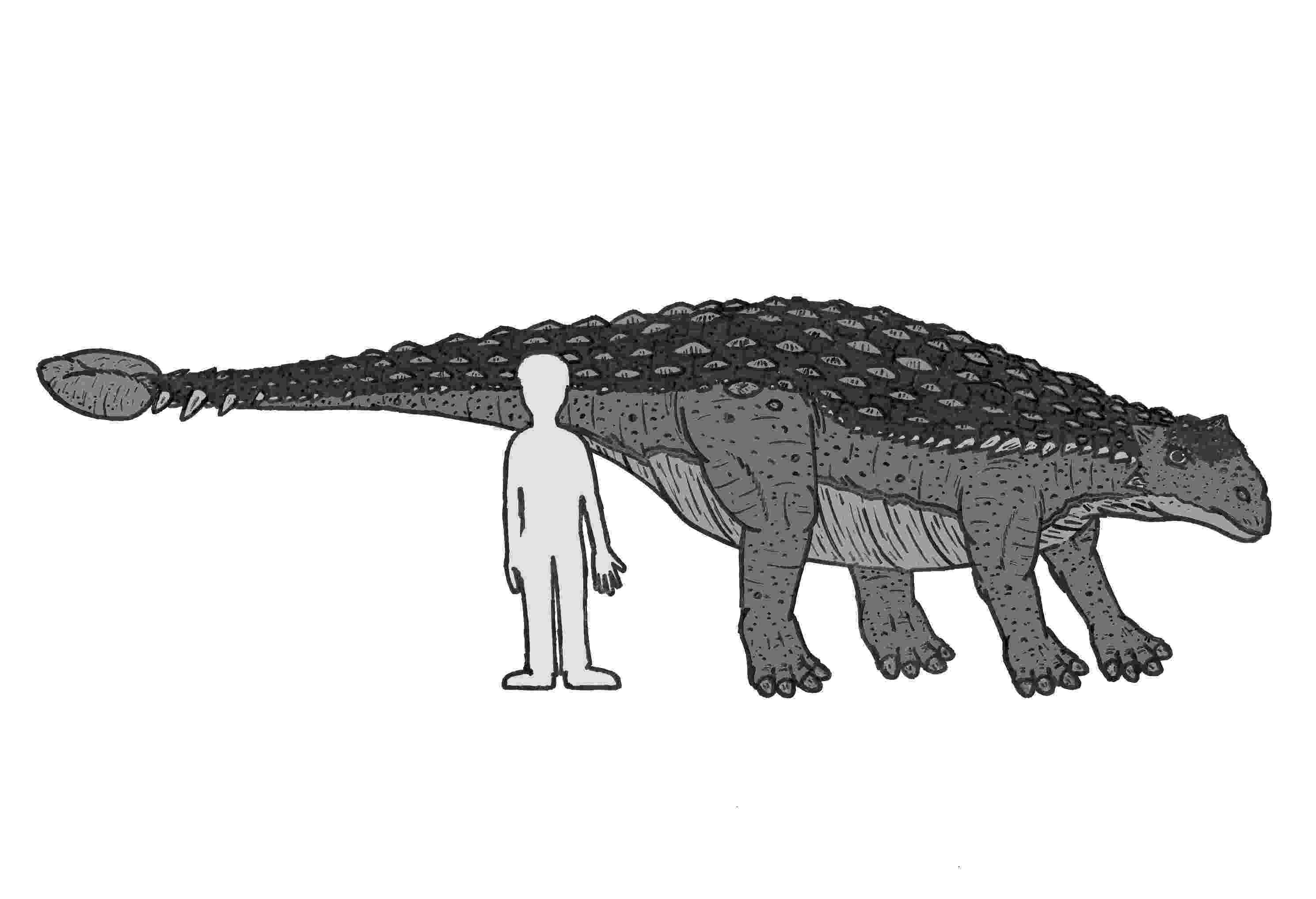 ankylosaurus 10 facts about ankylosaurus mental floss ankylosaurus