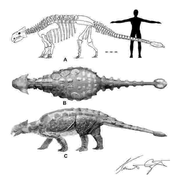ankylosaurus eight convergent turtle like morphologies science and ankylosaurus