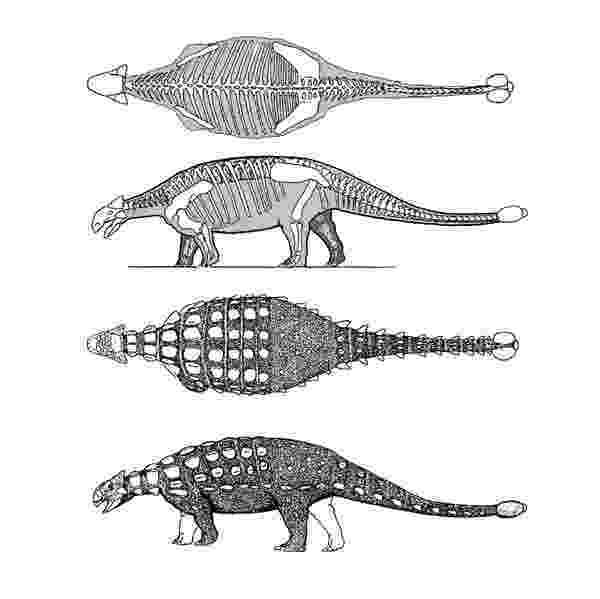 ankylosaurus how to draw an ankylosaurus ankylosaurus