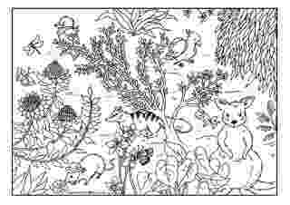 australian animals colour by numbers australian animal colouring pages numbers colour animals by australian