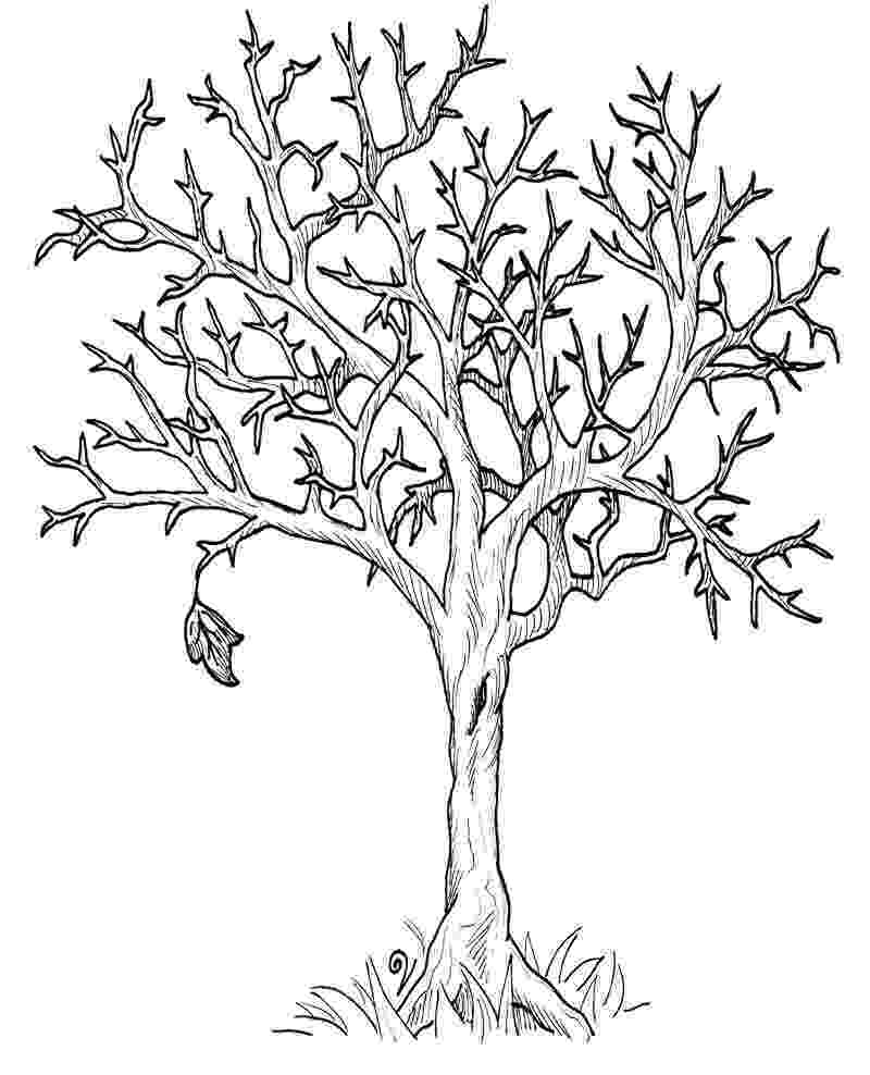 autumn tree coloring page autumn trees drawing at getdrawingscom free for coloring autumn tree page