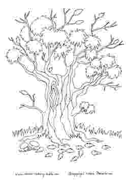 autumn tree coloring page tree adults and teens coloring pages tree page coloring autumn