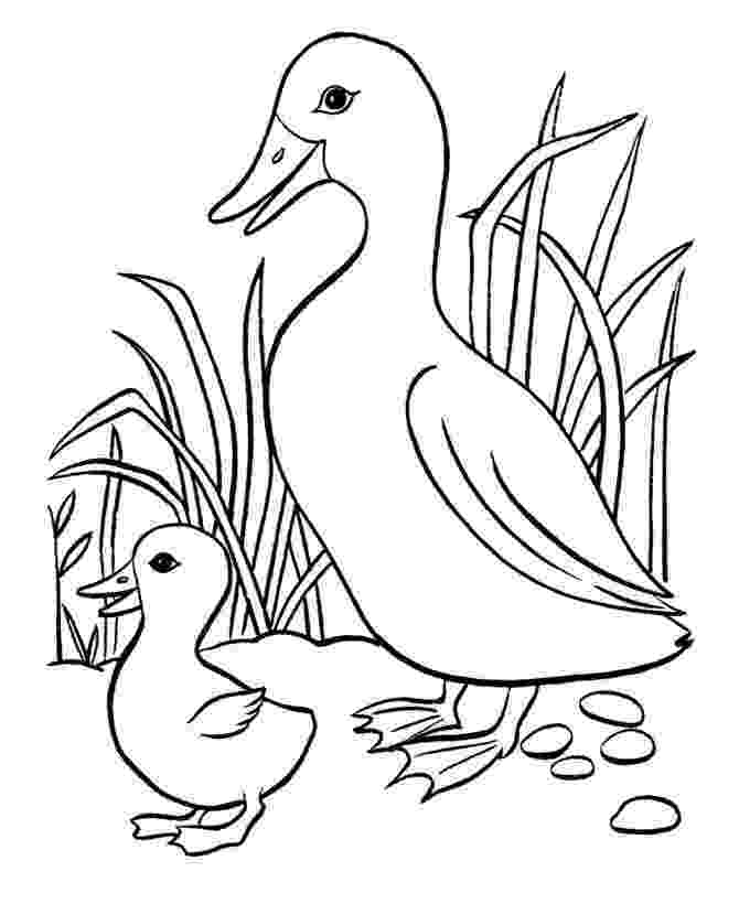 baby duck coloring pages baby duck and dragonfly coloring pages faith picture to pages baby duck coloring