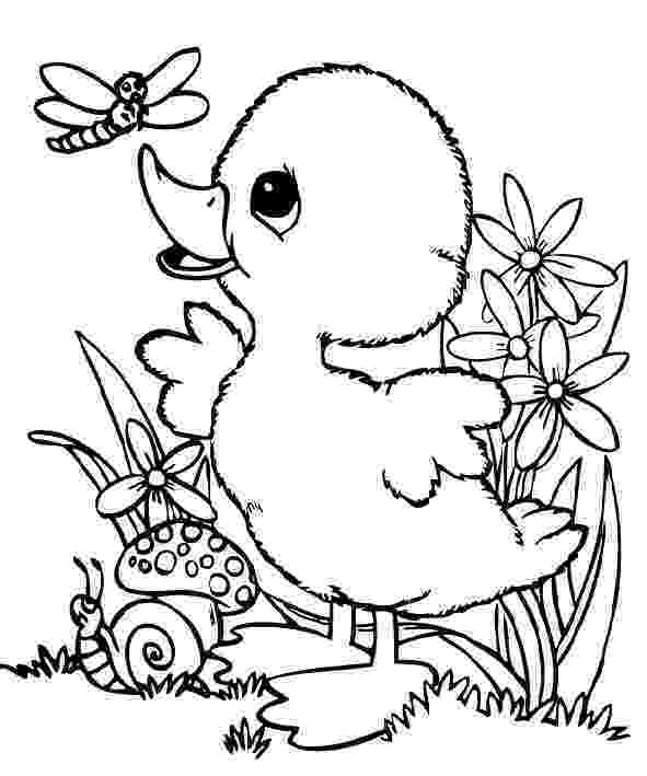 baby duck coloring pages cute baby duck coloring pages coloring home duck pages baby coloring
