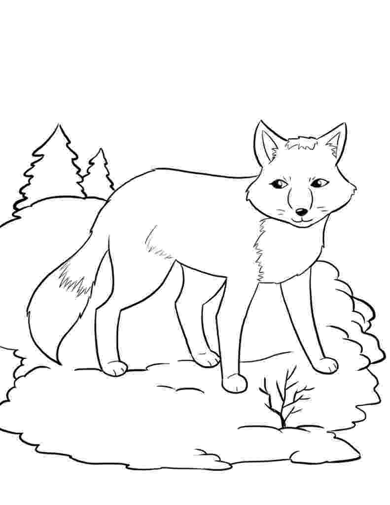 baby fox coloring pages free printable fox coloring pages for kids fox pages coloring baby