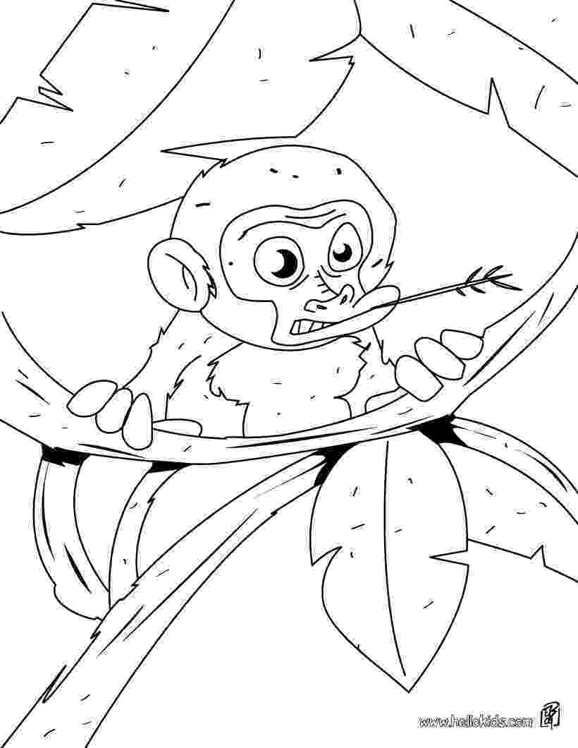 baby monkey coloring pictures cute monkeys coloring pages getcoloringpagescom monkey baby pictures coloring