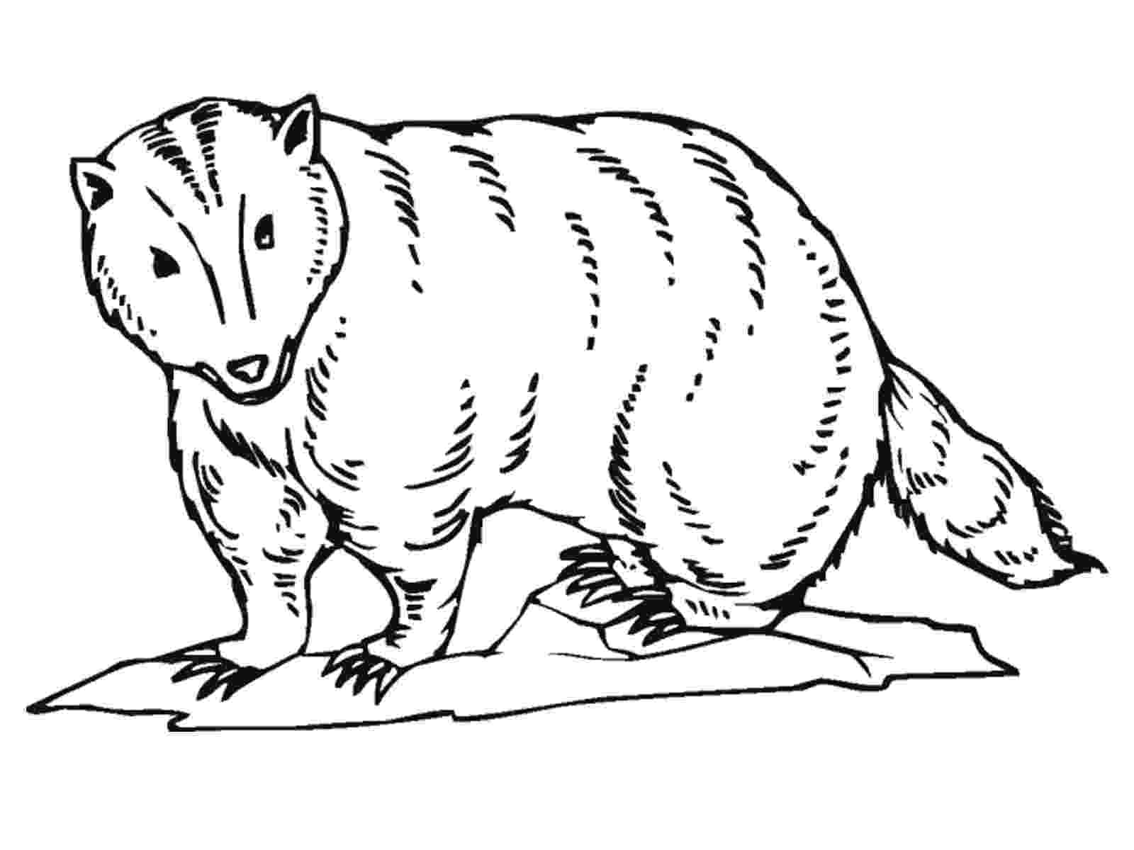 badger coloring page badger coloring page getcoloringpagescom page badger coloring