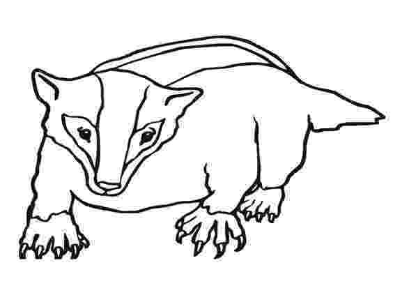 badger coloring page badger coloring page srp2013 under badger pinterest badger coloring page