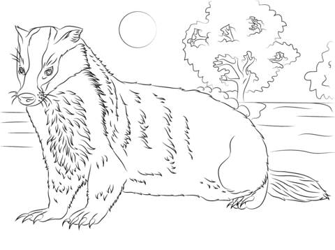 badger coloring page badger coloring pages free printable badger coloring page coloring badger