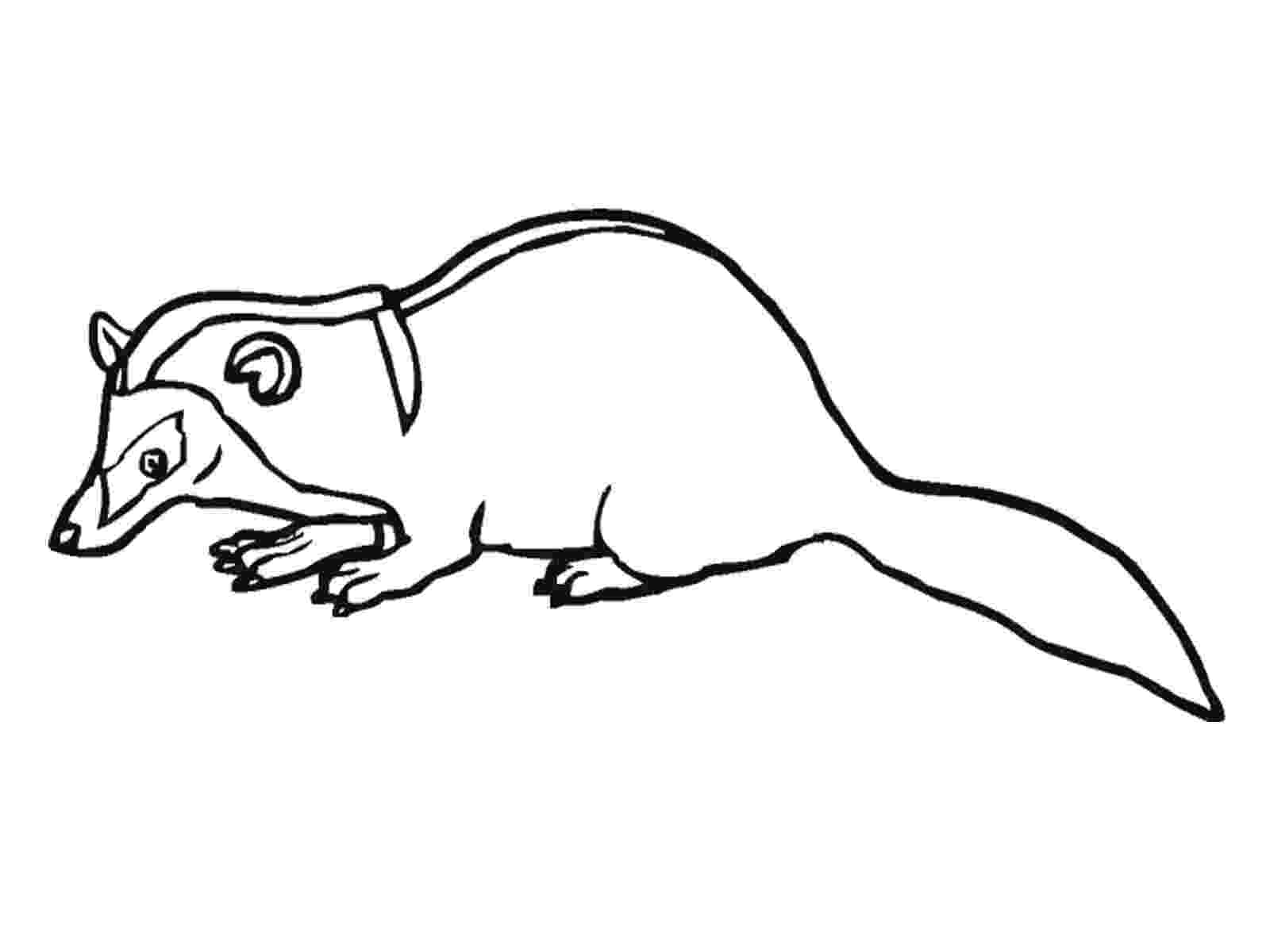 badger coloring page badger printable coloring pages badger page coloring