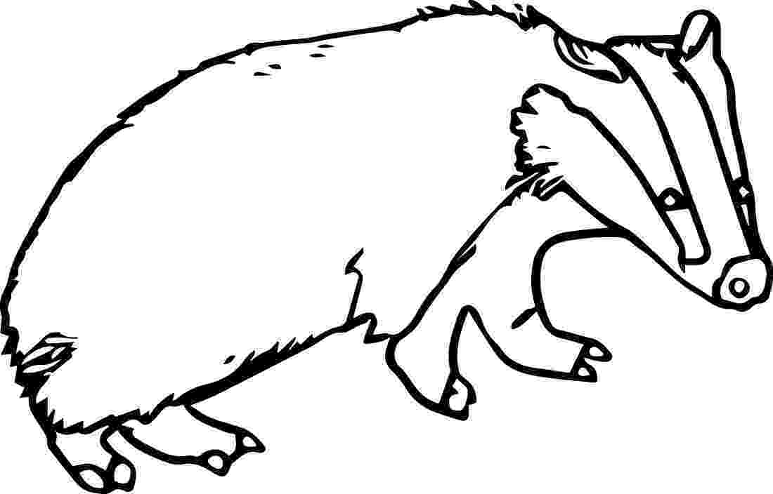 badger coloring page badger printable coloring pages page badger coloring