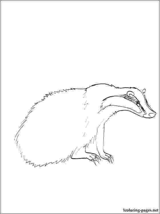 badger coloring page honey badger worksheet educationcom page coloring badger