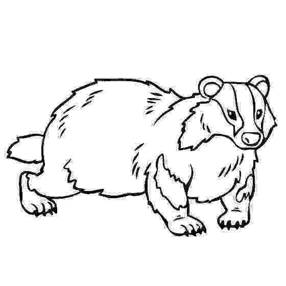 badger colouring badger printable coloring pages badger colouring