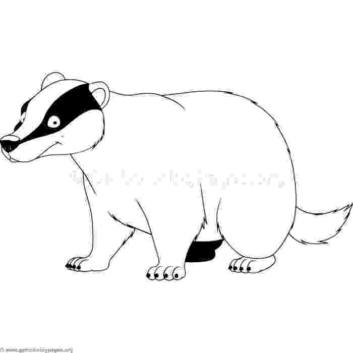 badger colouring badger vector images over 640 colouring badger