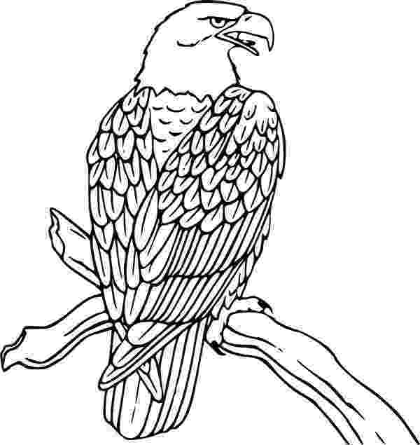 bald eagle coloring coloring activity pages bald eagle coloring page coloring bald eagle