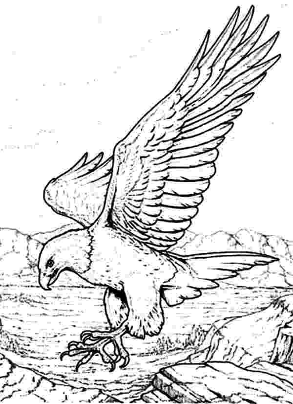 bald eagle coloring free eagle coloring pages bald coloring eagle